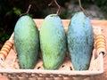 Green mangos mango in nature basket Royalty Free Stock Image