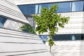 Green Maple Tree And Modern Ar...
