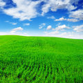 Green meadow Royalty Free Stock Photo