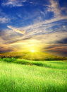 Green meadow with cloudy sky Royalty Free Stock Photo