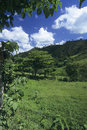 Green meadow in Dominican republic Stock Image