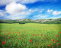 Green meadow with flowers and cloudy blue sky in mountain. Royalty Free Stock Photo