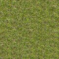 Green meadow grass seamless tileable texture in spring Stock Photography