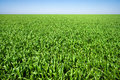 Green meadow under a blue sky vibrant Royalty Free Stock Photos