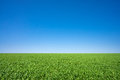 Green meadow under a blue sky vibrant Royalty Free Stock Image
