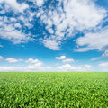 Green meadow under a blue sky vibrant Royalty Free Stock Images