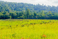 Green mealow on khaoyai national park thailand Royalty Free Stock Images