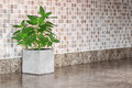 Green mint on kitchen countertop pot with Stock Photos