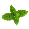Green mint leaves isolated on a white background Stock Photography
