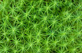 Green moss Stock Photography