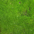 Green moss background of texture Stock Image