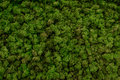 Green moss background texture beautiful in nature Royalty Free Stock Photo