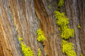 Green Moss on Bark Royalty Free Stock Photography