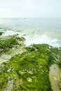 Green moss on beach growing rock Royalty Free Stock Images