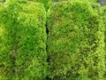 Green moss on the brick , textured background wallpaper. Royalty Free Stock Photo