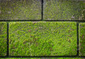 Green moss on brick wall with growing out of it Royalty Free Stock Images
