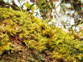 Green moss carpet in tropical forest Stock Image