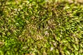Green moss close up abstract extreme exhibiting pattern Royalty Free Stock Photo