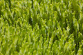 Green moss closeup of sunny texture Royalty Free Stock Photography