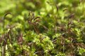 Green moss macro as a background local focus Royalty Free Stock Image