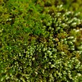 Green moss macro a shot of Stock Photo