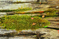 Green Moss In The Nature.