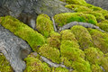 Green Moss In The Nature