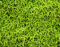 Green moss patern for ecology background Stock Photography