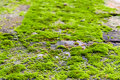 Green moss on rock the close up Stock Image