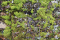 Green moss on the rocks natural background Royalty Free Stock Photography