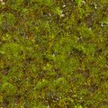 Green moss seamless tileable texture Royalty Free Stock Photography