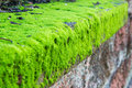 Green moss on surface of retaining wall