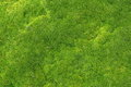 Green moss for texture, background Royalty Free Stock Photo