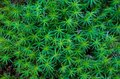 Green Moss Texture Background Royalty Free Stock Photo