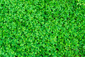 Green moss texture for background Royalty Free Stock Photo