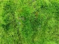 Green moss with texture, textured background wallpaper. Royalty Free Stock Photo