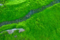 Green moss top view for background texture Stock Image
