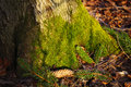 Green moss on a tree in the forest Royalty Free Stock Photos