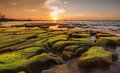 Green moss on unique rock formation and sunset background Royalty Free Stock Photo