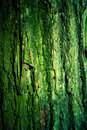 Green mossy tree bark texture Royalty Free Stock Photos