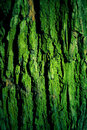 Green mossy tree bark texture Royalty Free Stock Image