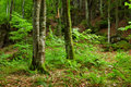 Green mountain forest in Pyrenees Royalty Free Stock Images