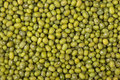 Green mung beans Royalty Free Stock Photo