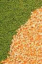 Green mung beans and corn grains Royalty Free Stock Photo