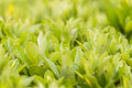 Green nature background horizontal abstract of bright plants and leaves with shallow depth of field Stock Photography