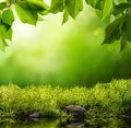 Green nature background serene with grass leaves stones and water in the foreground over out of focus trees and sunlight Royalty Free Stock Images