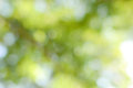 Green Nature Blurred Background