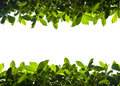 Green nature foliage up and down border Royalty Free Stock Photo