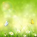 Green nature sunny background