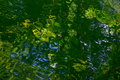 Green Nature Water Reflection